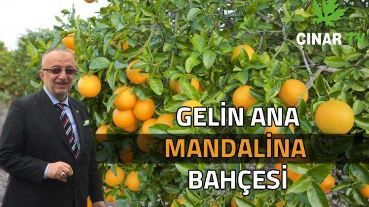 Gelin Ana Mandalina Bahçesi