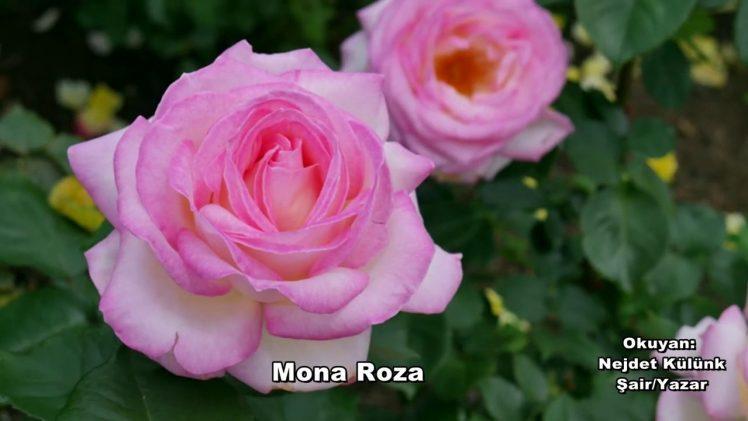 Mona Roza Okuyan Nejdet Külünk